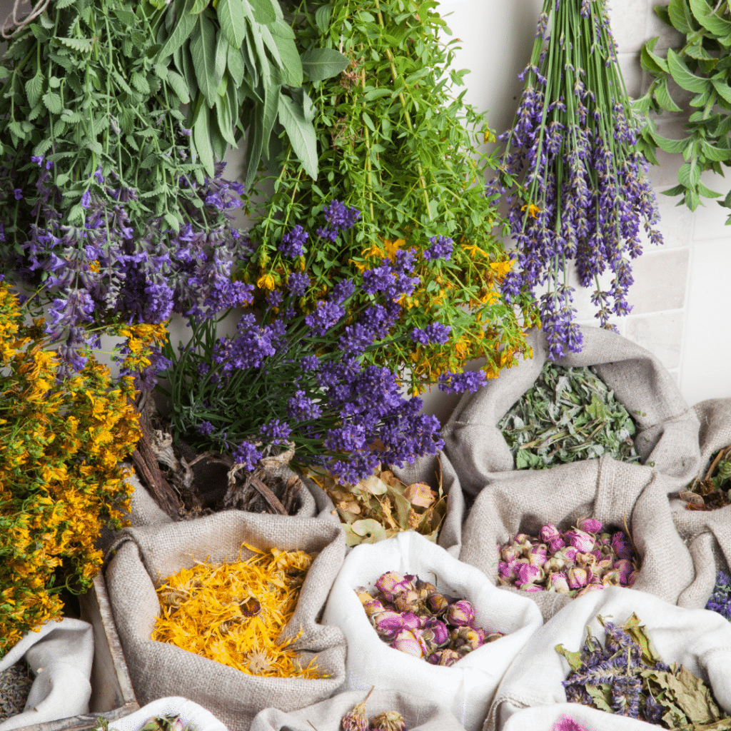 Hanging Dried Herbs.